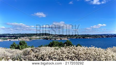 Close-up of flowers and view of the cliffs on the coast of La Coruna Bay (Galicia) on the Spanish Atlantic coast. Blue sky with some clouds and calm sea