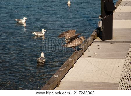 Seagulls on sunny walkway and in water