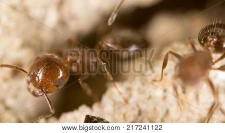 Ant. close .