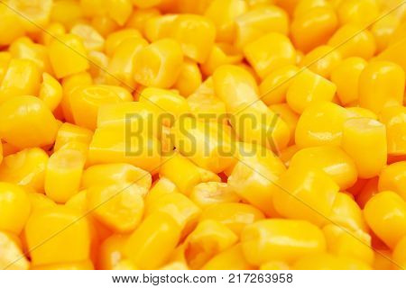 Corn texture. Yellow corns as background. Corn vegetable pattern. Background of bulk of yellow corn grains. Shiny corns. Corn grains.