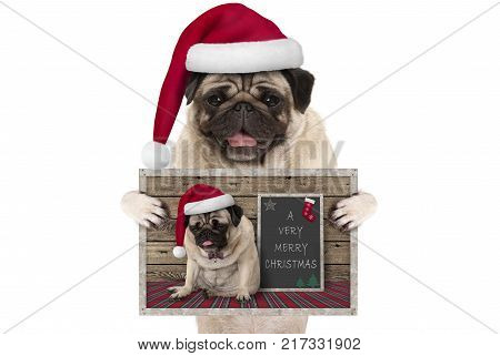 cute smiling Christmas pug dog with santa hat holding up greeting card with selfportrait isolated on white background