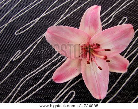 Contemporary Lily