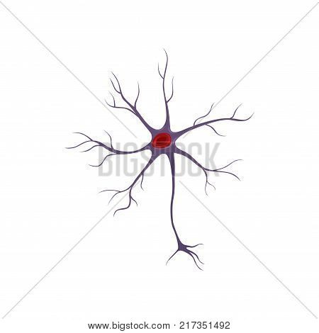 Structure of neuron, nerve cell involved in the process of human life. Anatomy and science concept. Flat vector icon isolated on white. Design element for medical brochure, poster or infographic.