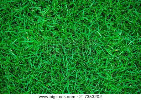 Green fresh nature grass in botany garden poster