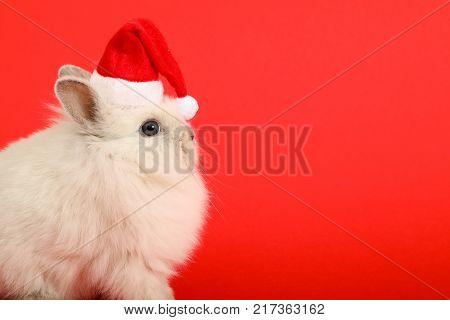 Christmas rabbit. Celebrate holiday with Christmas bunny.