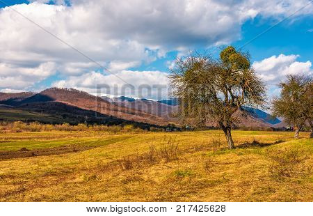 Conifer Tress On Grassy Hillside In Autumn
