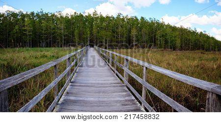 Boardwalk Path At Corkscrew Swamp Sanctuary In Naples, Florida