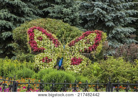 Large flower-shaped flower bed in the city park close up