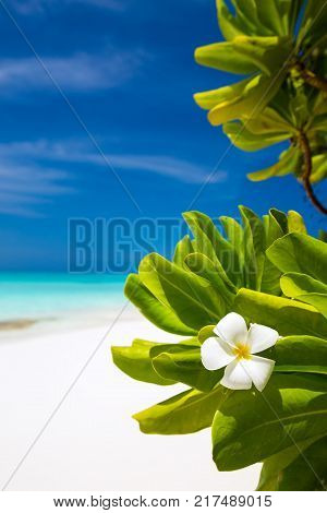 Beautiful nature, flora and white sandy beach on Maldives island, perfect getaway for your vacations