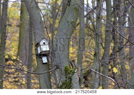 wooden white birdhouse hanging on a tree in an autumn forest