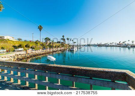 White heron in Oceanside harbor. California USA