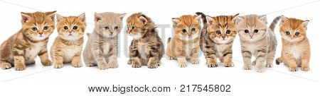 Portraits of a large group of small kittens on a white background