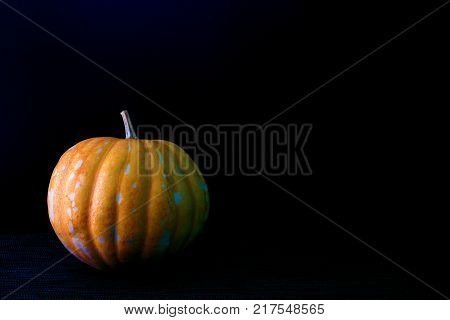 Yellow pumpkin on dark background. Fresh vegetable harvest. Ripe orange pumpkin for Halloween decoration. Dramatic Halloween banner template with real whole pumpkin. Autumn season harvesting concept