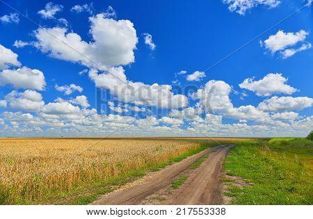Summer view on golden wheat fields and countryside field road. Kursk Krasnodar region country road among golden wheat fields. Road to horizon. Horizon skyline road way path
