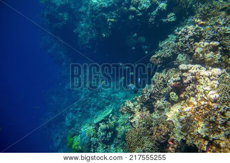 Coral reef wall by blue ocean abyss. Undersea landscape. Fauna and flora of tropical shore. Coral reef underwater photo. Snorkeling in tropics. Exotic island seaside vacation. Aquarium banner template