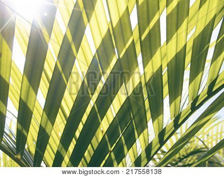 Green palm leaf transparent silhouette on sun. Palm leaf closeup. Green leaf of coco palm tree. Vintage toned photo background. Sunshine through green leaf. Exotic vacation destination banner template