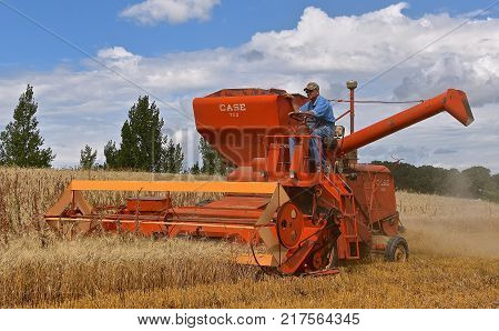 ROLLAG, MINNESOTA, Sept 2. 2017: An old Case self propelled combine is harvesting grain  in a field demonstrations at the annual WCSTR farm show in Rollag held each Labor Day weekend where 1000's attend.
