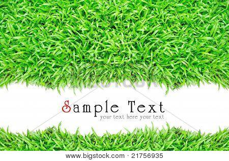 Grass Frame In White Background