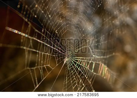 Spider's web illuminated by the evening sun. Selective focus.