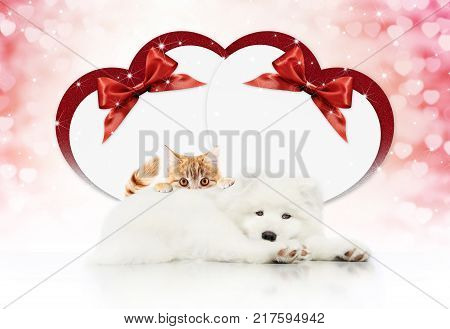 valentine gift card or pets store signboard with cat and dog together heart shape and red ribbon bow on christmas lights background blank template and copy space