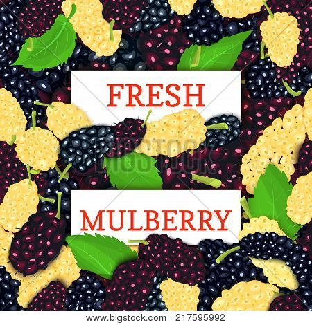 Two white rectangle label on mulberry berries background. Vector card illustration. Fresh and juicy mulberry fruits for design of food packaging juice breakfast detox diet, jam