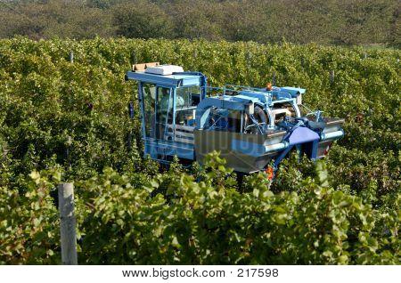Vineyard Machine Harvest