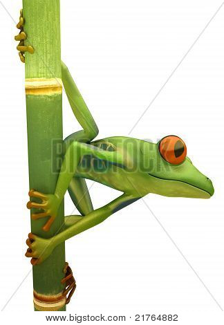 Red Eyed Treefrog On Bamboo Isolated
