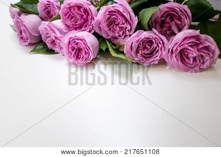 Pink roses flowers on the top of white background. Symbol of elegance, affection and sophistication. Free space concept