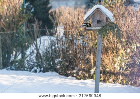 Colorful Woodpecker At The Birdhouse