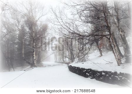 snow covered path and beech wood in Etna Park, Sicily