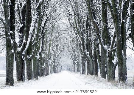 Winter nature. Winter forest landscape in early winter morning. Winter nature view with snowy winter forest - winter landscape. Snow on tree.