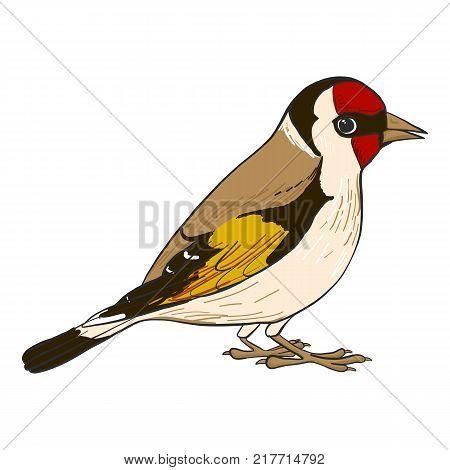 goldfinch, vector bird, hand drawn songbird, isolated vector elements