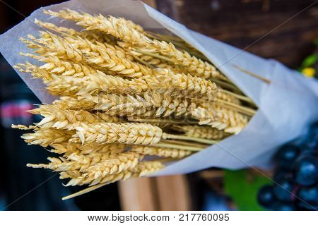 Close up sheaf of wheat wrapped in paper