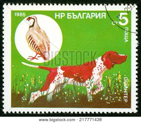 UKRAINE - circa 2017: A postage stamp printed in Bulgaria shows Dog Pointer Chukar Partridge Alectoris chukar Series Hunting dogs circa 1985