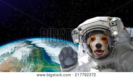 Portrait of a pretty dog astronaut in space on background of the globe. Elements of this image furnished by NASA.