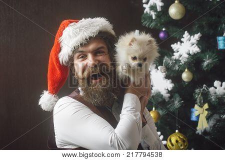 Santa Claus Man With Pet At Tree.