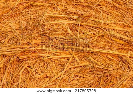 close-up of a hay cylindrical bale in a farmland, Particularly the intricacy of grain plants that form one cylindrical bale