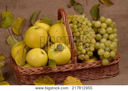 Still-life of fruits. Fruits in the basket. Harvest of grapes and apples. Fruits against the background of autumn leaves.
