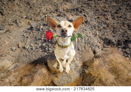 Dog Ready To Go For A Walk On Valentines