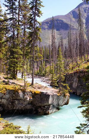 Turquoise colored waters from Tokumm Creek flows through Marble Canyon in Kootenay National Park British Columbia Canada near Banff. Vertical orientation.