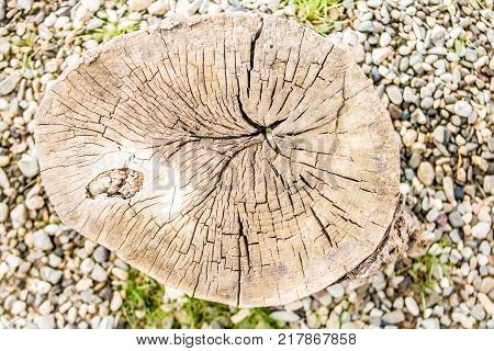 Cross section of tree trunk showing growth rings on gravel stones. Close up shot.