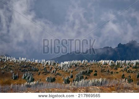 North Cascades National Park scenic landscape. Pasayten Wilderness. Frozen trees on mountain ridge in early winter. Cascade mountains in Pacific Northwest. Seattle. Washington. United States.