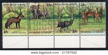 Animals In Central Africa
