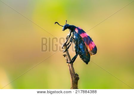 Beetles are a group of insects that form the order Coleoptera, in the superorder Endopterygota. Their front pair of wings is hardened into wing-cases, elytra, distinguishing them from most other insects. The Coleoptera, with about 400,000 species, is the
