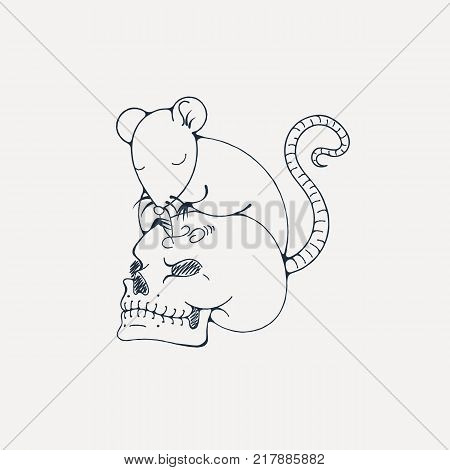 Illustration with rat engraves human skull. Coloring page. Vector image.