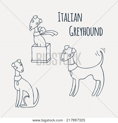 Italian Greyhound Cartoon Dog Set. Coloring page. Vector Illustration