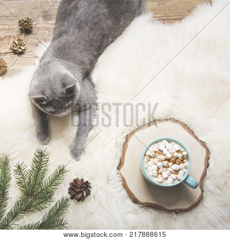 Christmas Card. Cup Of Coffee, British Cat. Rest At Home. Top View. Copy Space. Matte Image.