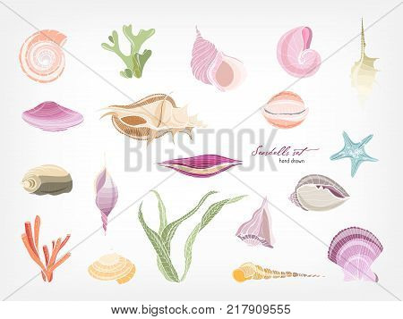 Collection of gorgeous hand drawn seashells, corals and seaweed isolated on white background. Bundle of shells of marine molluscs. Flora and fauna of sea and ocean. Colorful vector illustration