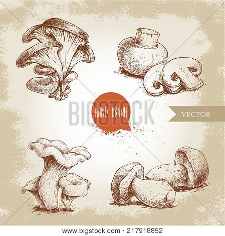 Hand drawn sketch style mushrooms compositions set. Champignon with cuts oysters chanterelles and porcini mushrooms. Organic eco raw food vector illustrations.