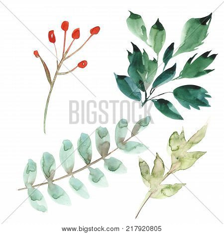 Watercolor floral set. Colorful green floral collection with leaves, drawing watercolor. Set of floral elements for your compositions